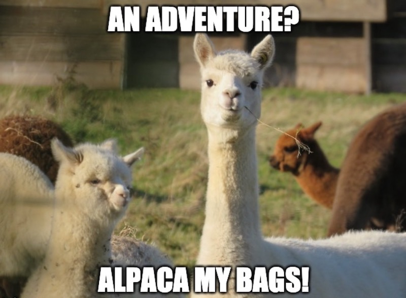 """This is meme with an alpaca. Displayed are the words """"An adventure? Alpaca my bags!"""". We will help you start your affiliate marketing business."""