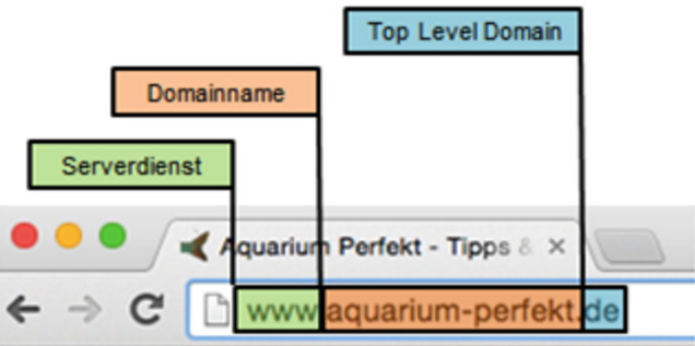 Domain Auswahl Aufbau